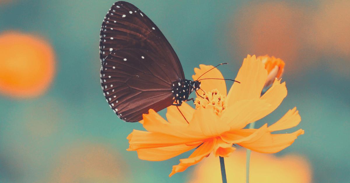 Dlaczego warto być wdzięcznym? PS, Pracownia Szczęścia, szczęście, psychologia pozytywna, wdzięczność