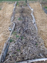 This row is awaiting the warmer days so that I can plant cucumber seeds.
