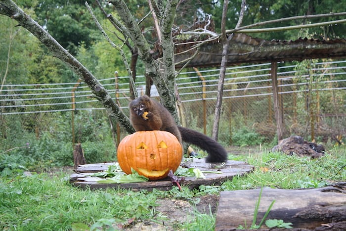 Halloween Events in Portishead - Wild Place Project