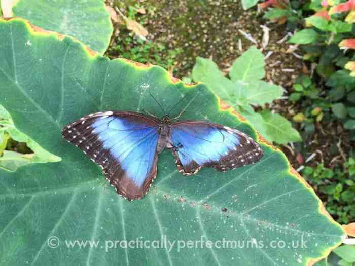 Otters and Butterflies, Buckfastleigh on South Devon Railway - explore Dartmoor, Visit Dartmoor