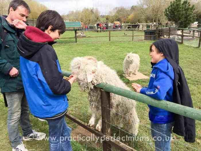 Totnes Rare Breeds Farm on South Devon Railway - explore Dartmoor, Visit Dartmoor