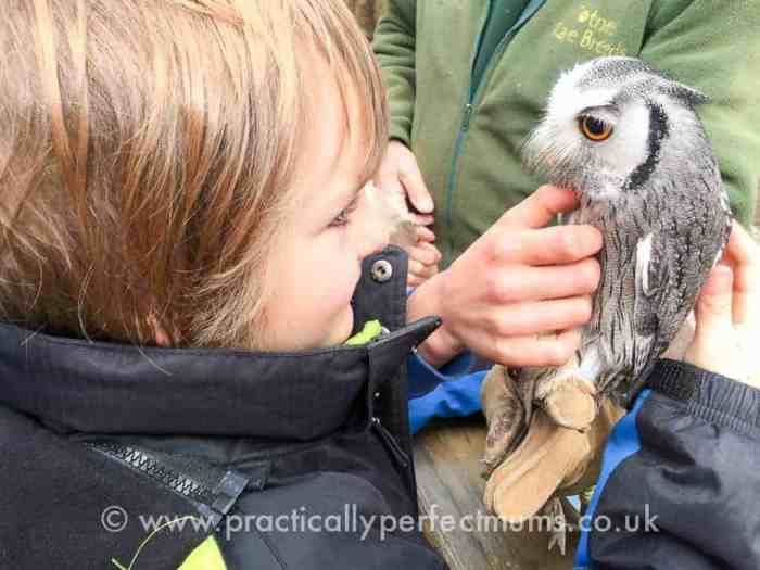 Petting an owl at Totnes Rare Breeds Farm on South Devon Railway - explore Dartmoor, Visit Dartmoor