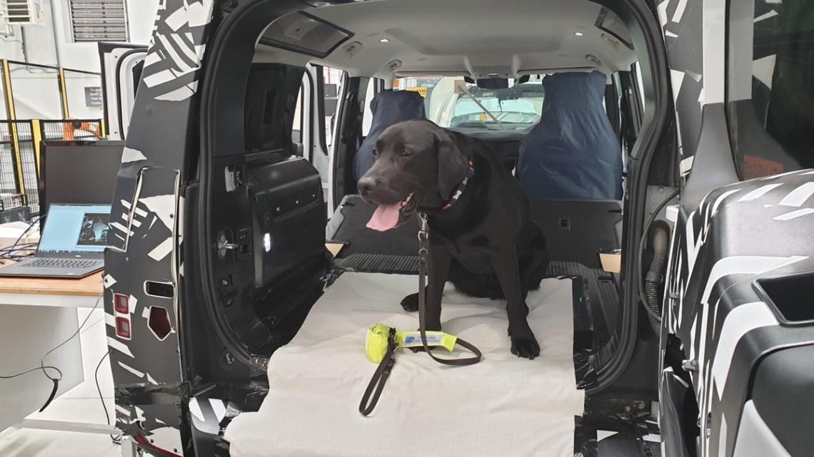 Yogi the Land Rover dog 3D paw test