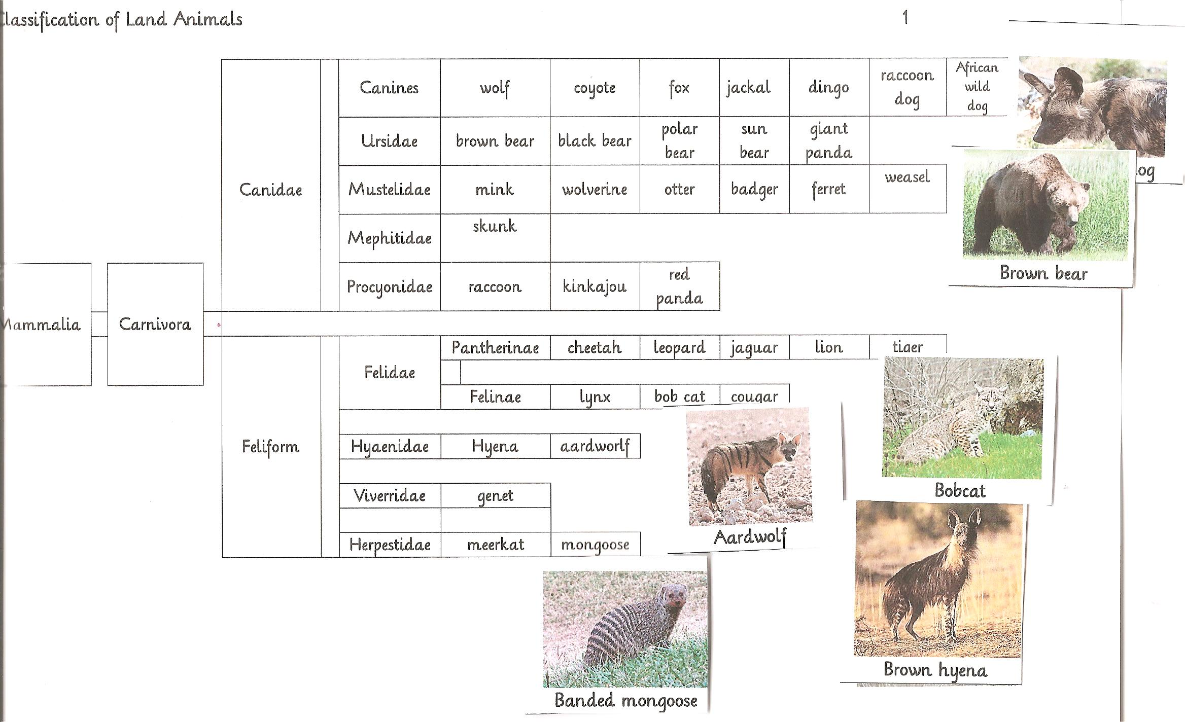 Classify Land Animals
