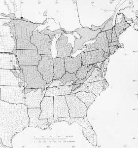 Tilia Americana Range - Linden Tree