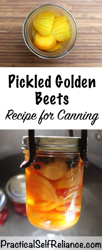 Pickled Golden Beets - Recipe for Canning #beetsrecipe #beetrecipe #pickledbeets #canning #foodpreservation #preservingfood #homestead #selfreliant #selfsufficiency #homesteading