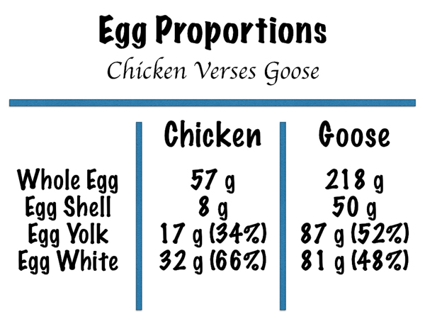 Weights of various parts of goose and chicken eggs compared.