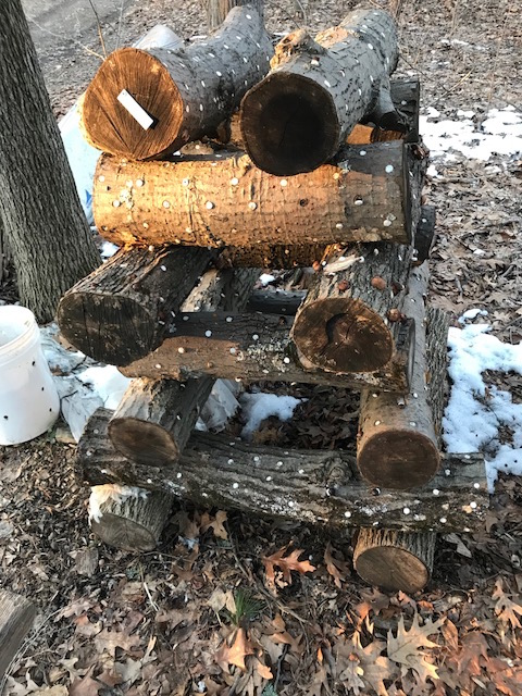 Shiitake Log Stack
