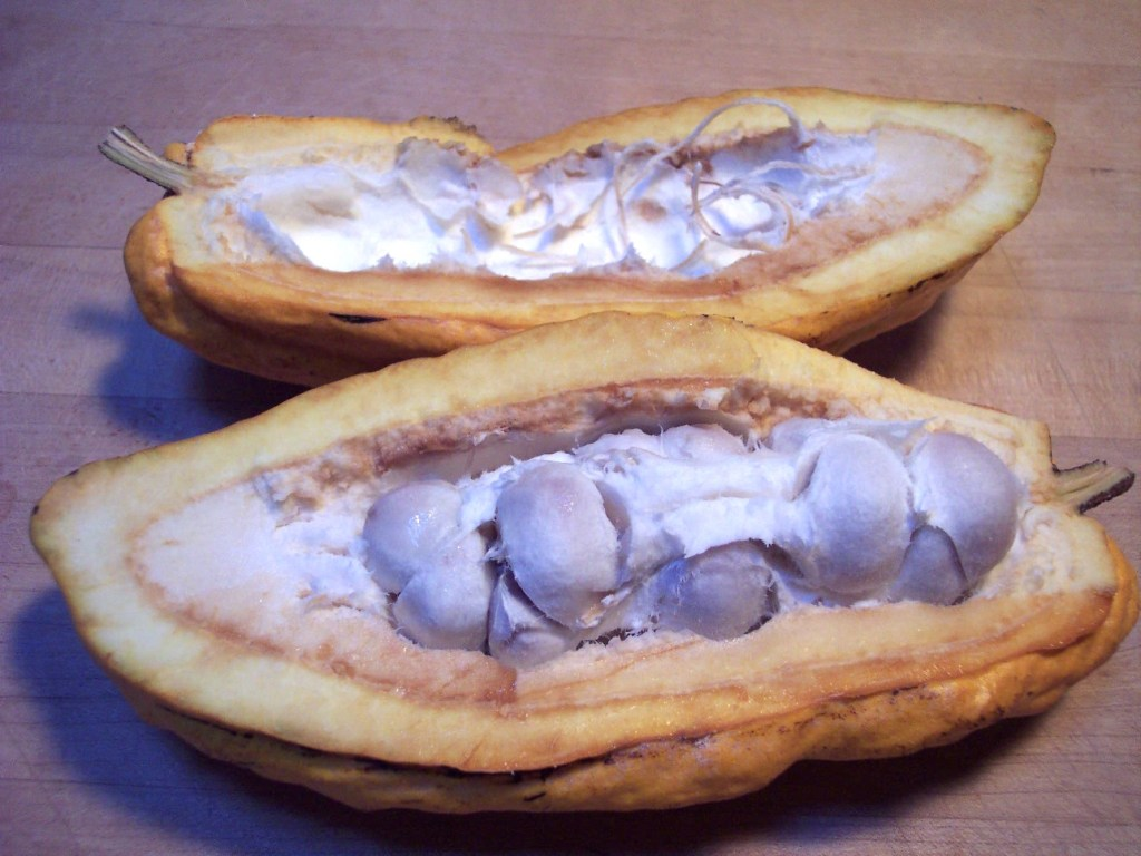 How to Grow Your Own Cocao Tree - Harvest Your Own Chocolate from an Indoor Chocolate Tree