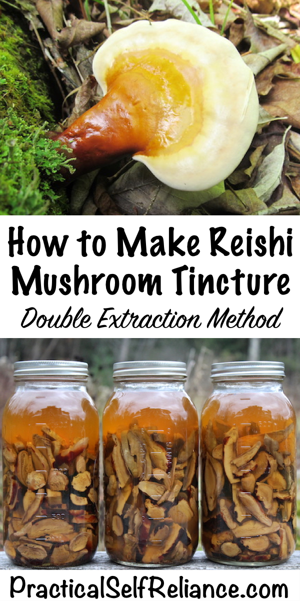 How to Make Reishi Mushroom Tincture ~ Double Extraction Mushroom Tincture #medicinalmushrooms #reishi #foraging #forage #wildcrafting #herbalism #naturalremedies #tincture