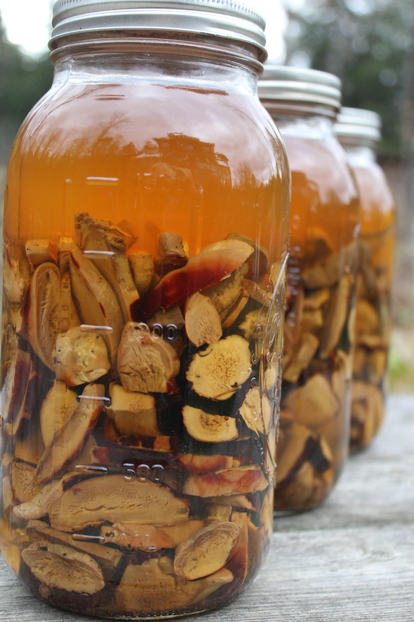 half gallon mason jars full of reishi tincture infusing