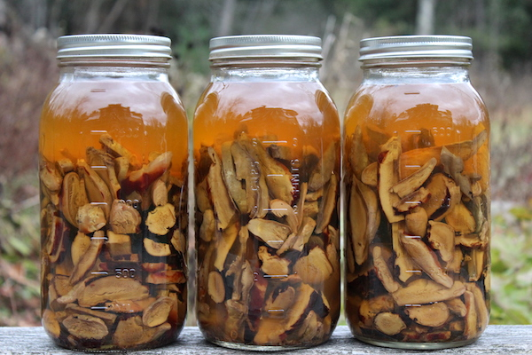Reishi Mushroom Tincture infusing in mason jars.