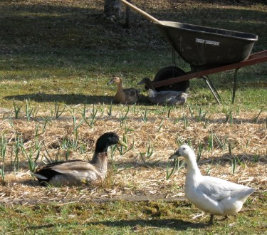 Starting a Suburban Micro Farm – Practical Advice