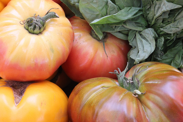 Best Heirloom Tomatoes for Canning