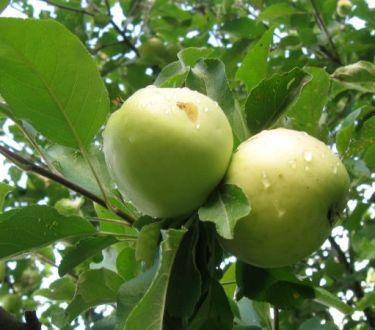 How to Plant an Orchard for Year Round Fruit (Even in Cold Climates)