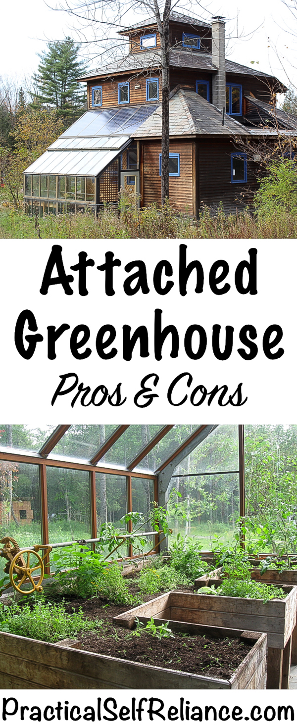 Attached Greenhouse Pros and Cons #greenhouse #seedstarting #heirloom #grownfromseed #gardening #organicgardening #foodgardening #howtogrow #vegetablegardening #gardeningtips #homesteading #homestead #selfreliant #sustainability