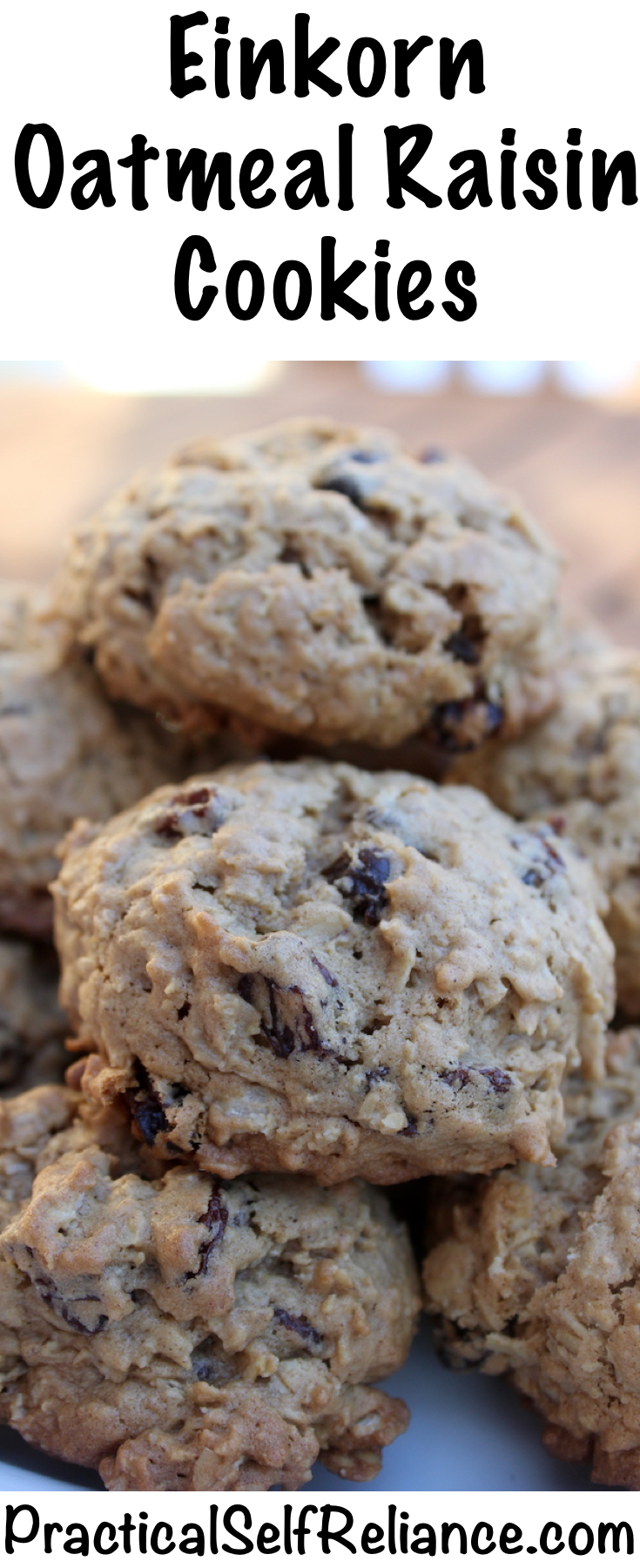 Einkorn Oatmeal Raisin Cookies Recipe #oatmealraisin #oatmealraisincookies #cookierecipe #bakingrecipe #einkornflour #einkorn
