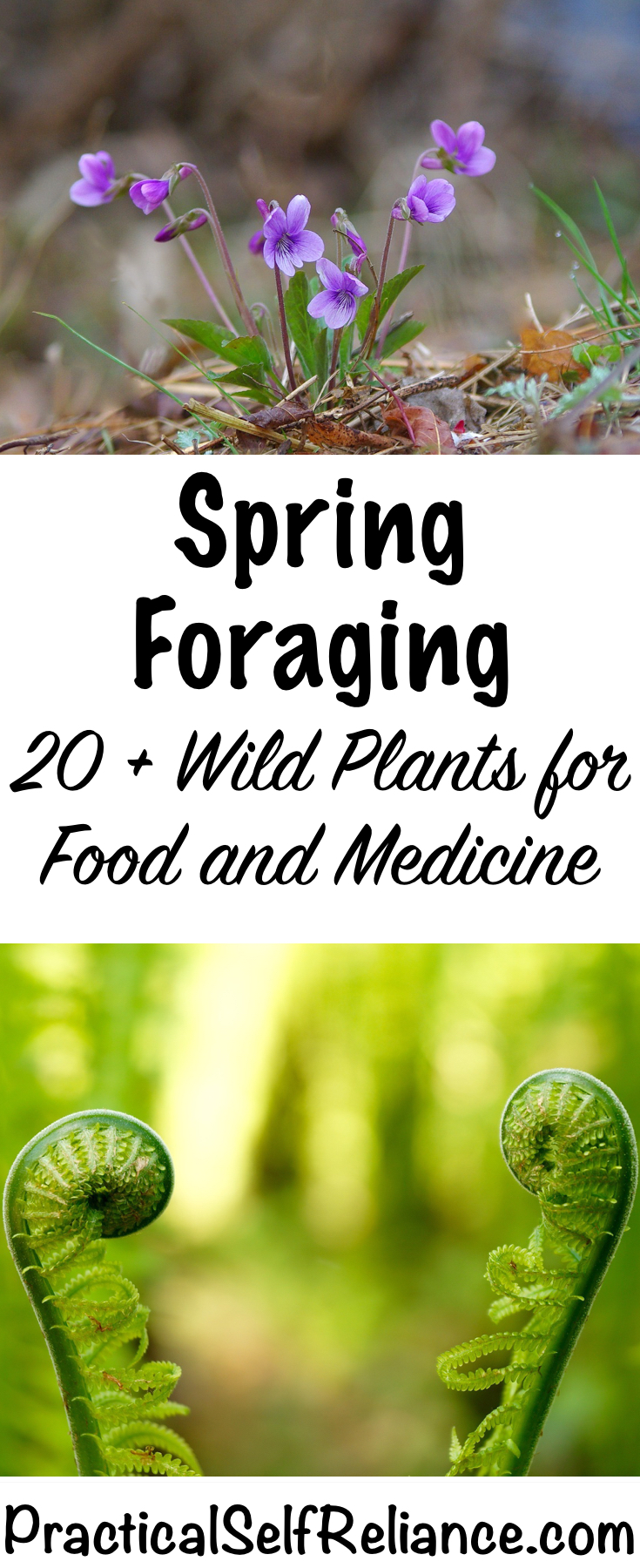 Spring Foraging ~ 20+ Wild Edibles to forage for food and medicine #foraging #wildfood #forage #selfsufficiency  #wildcrafting
