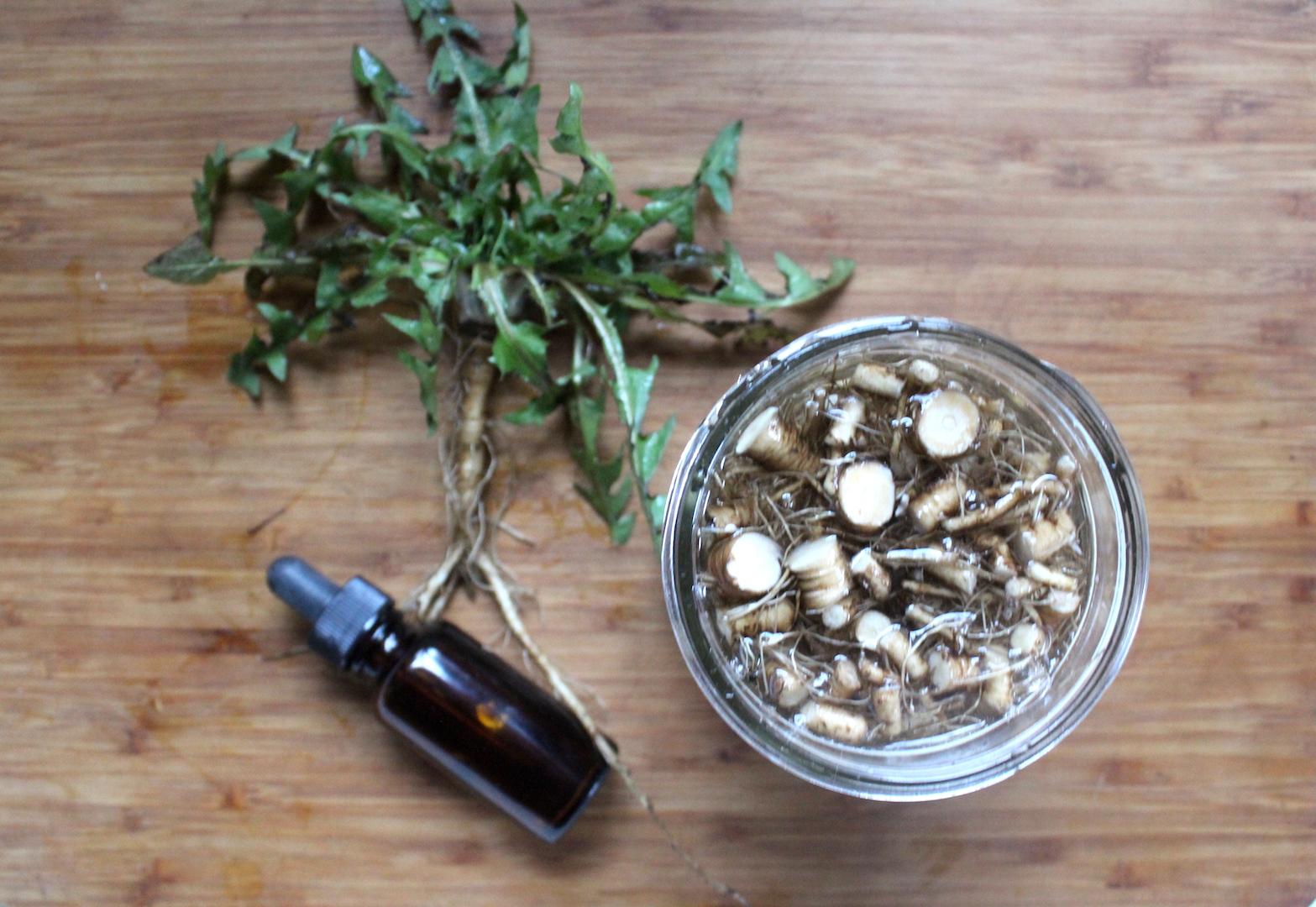 Making Dandelion Tincture