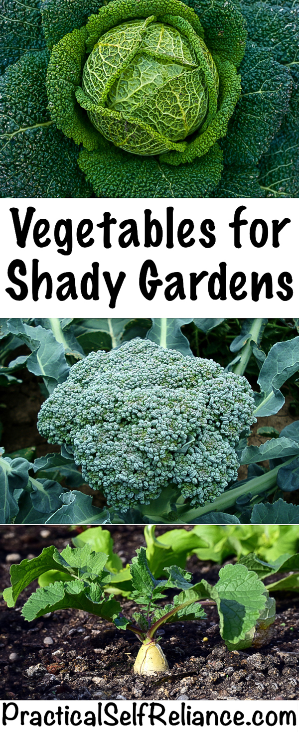 Vegetables for Shady Gardens #gardening #organicgardening #howtogrow #vegetablegardening #gardeningtips #homesteading #homestead #selfreliant #shadegarden