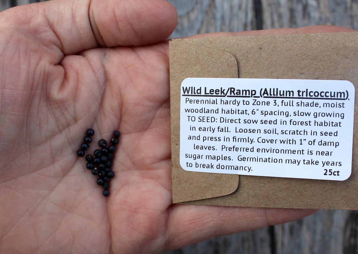Wild Leek Seeds