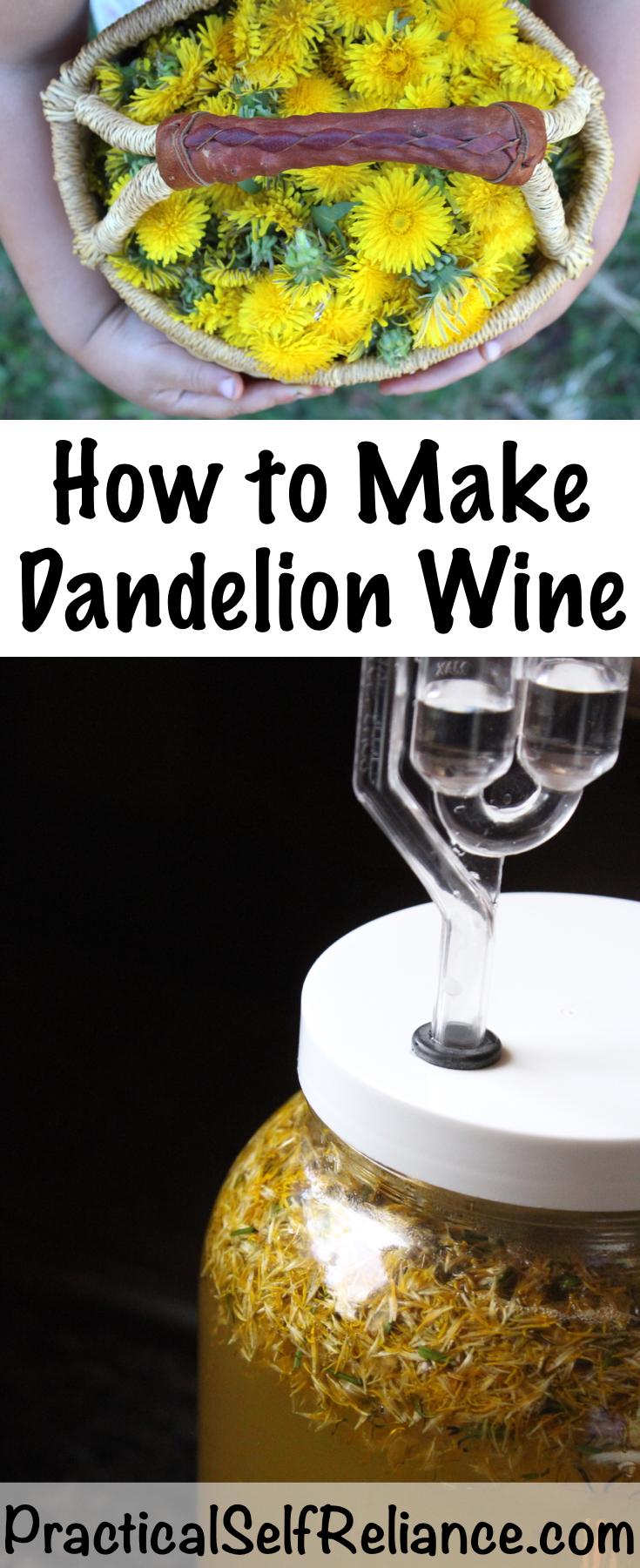 How to Make Dandelion Wine ~ Old Fashioned Dandelion Wine Recipe