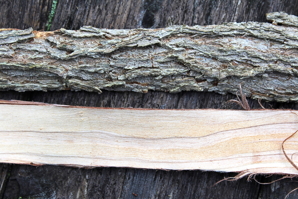 Slippery Elm Inner and Outer Bark