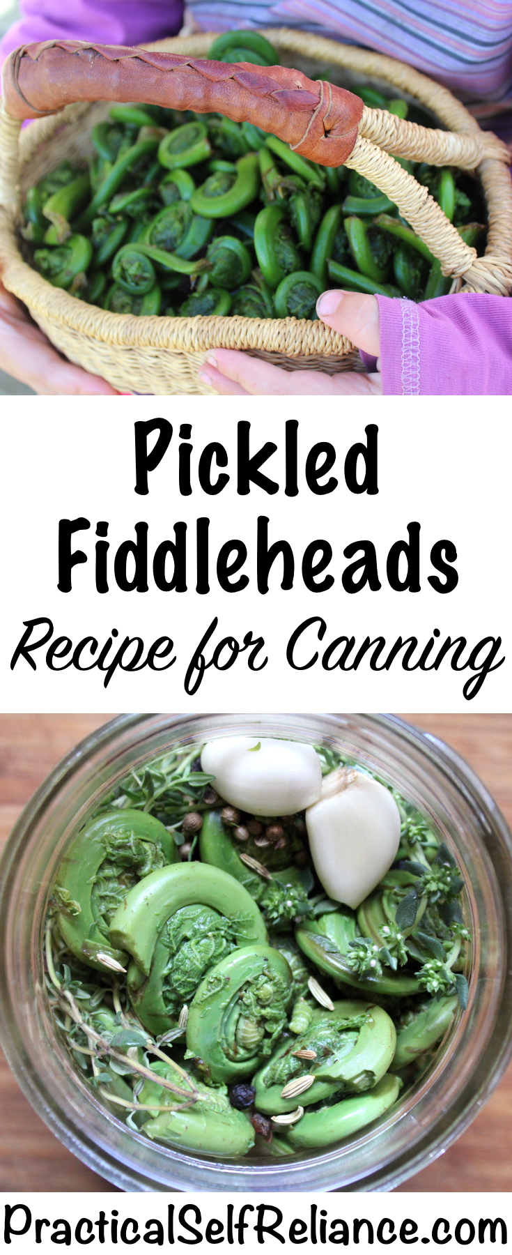 Pickled Fiddleheads ~ Recipe for Canning #fiddleheads #fiddlehead #ferns #foraging #wildfood #forage #selfsufficiency  #wildfood #wildcrafting #canning #foodpreservation