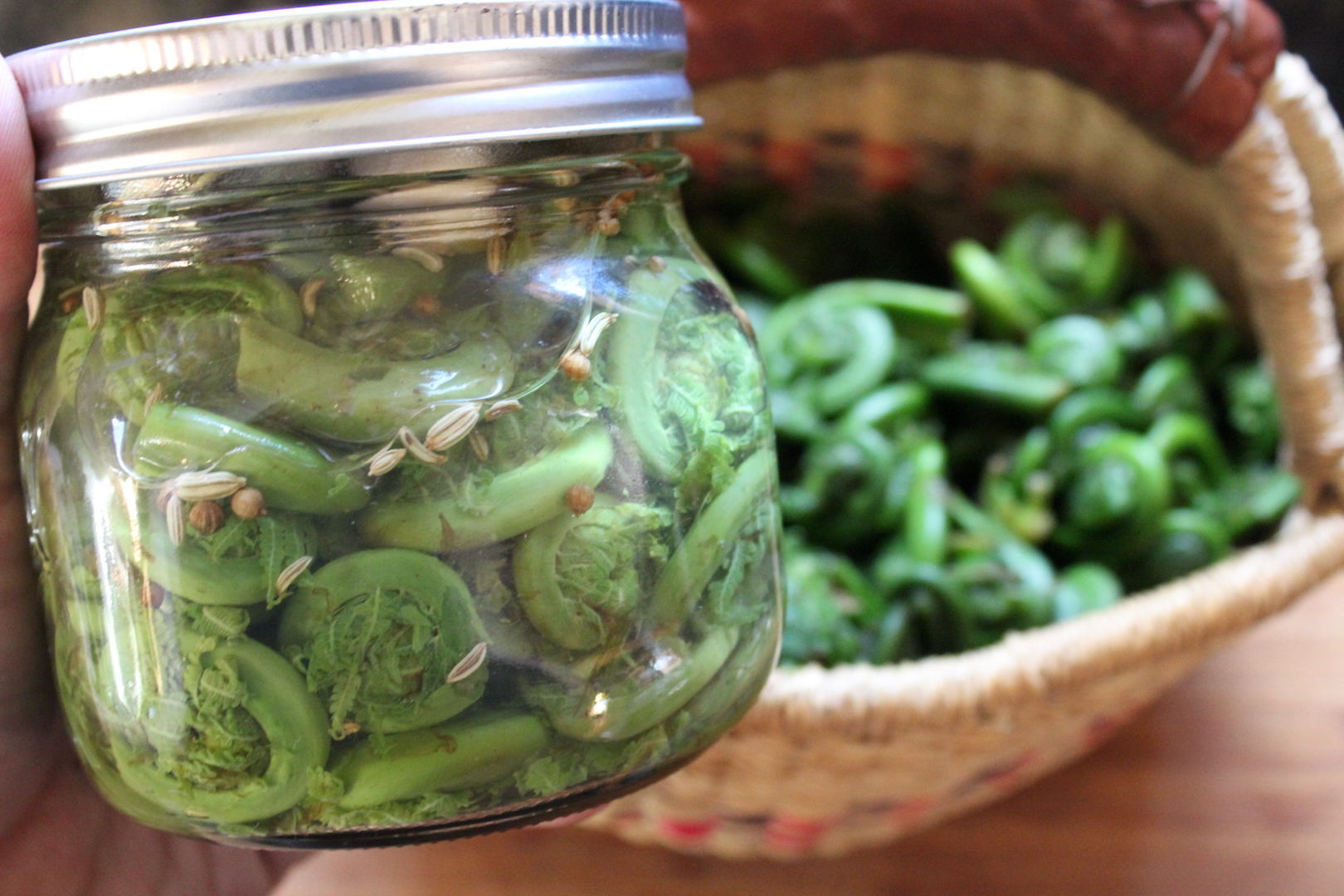 Canned Pickled Fiddleheads