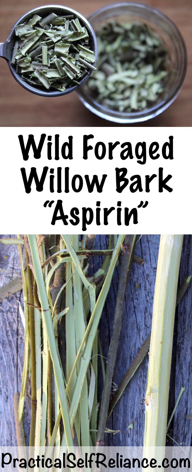 Foraging Willow Bark for Medicine ~ Natural Wild Aspirin #willow #willowbark #painrelief #herbs #herbalist #herbalism #medicine #forage #foraging #wildcrafting #survival #naturalremedy #homestead