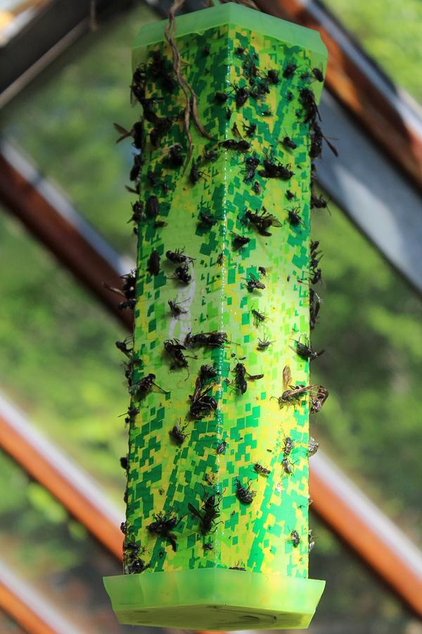 Sight Lure Wasp Trap