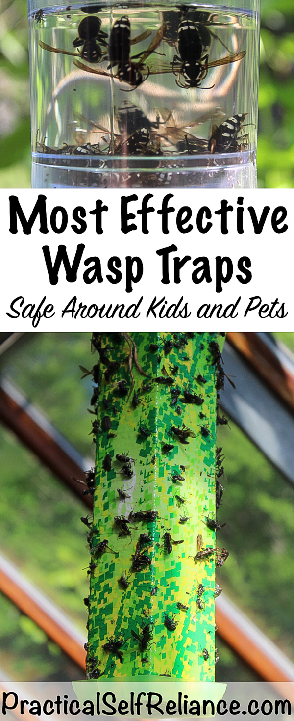 Natural Wasp Traps ~ Safe Around Kids and Pets #wasptrap #wasp #naturalpestcontrol