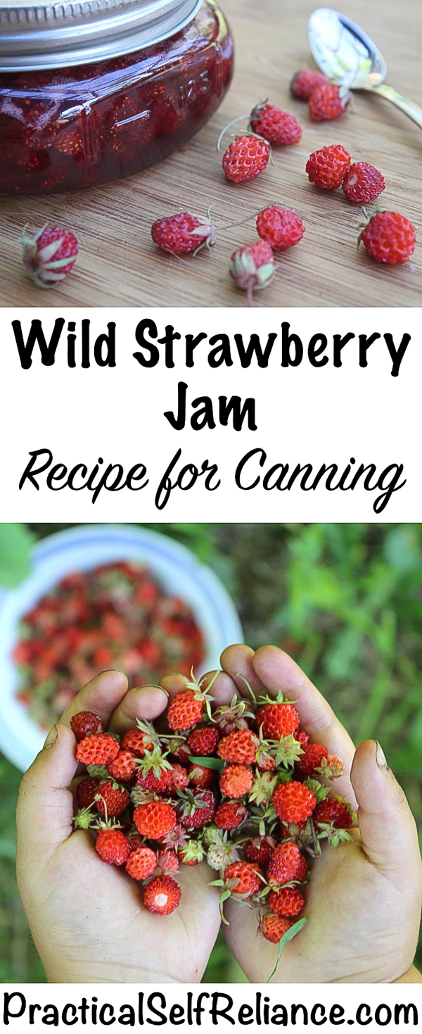 Wild Strawberry Jam Recipe for Canning #strawberryjam #jamrecipes #strawberryrecipes #forage #foraging #wildfood #wildcrafting #wildstrawberries
