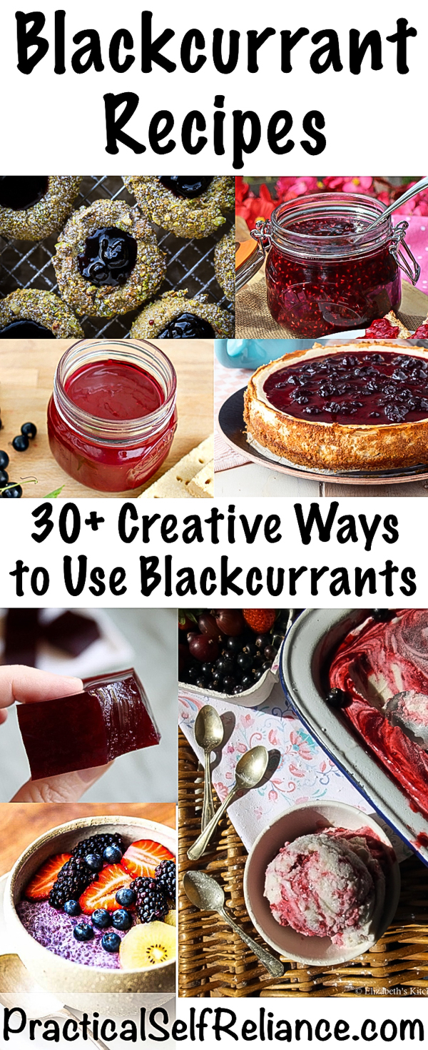 Blackcurrant Recipes ~ 30+ Creative Ways to Use Blackcurrants #blackcurrants #currant #recipes #superfood #berries #wildcrafting #foraging #wildfood