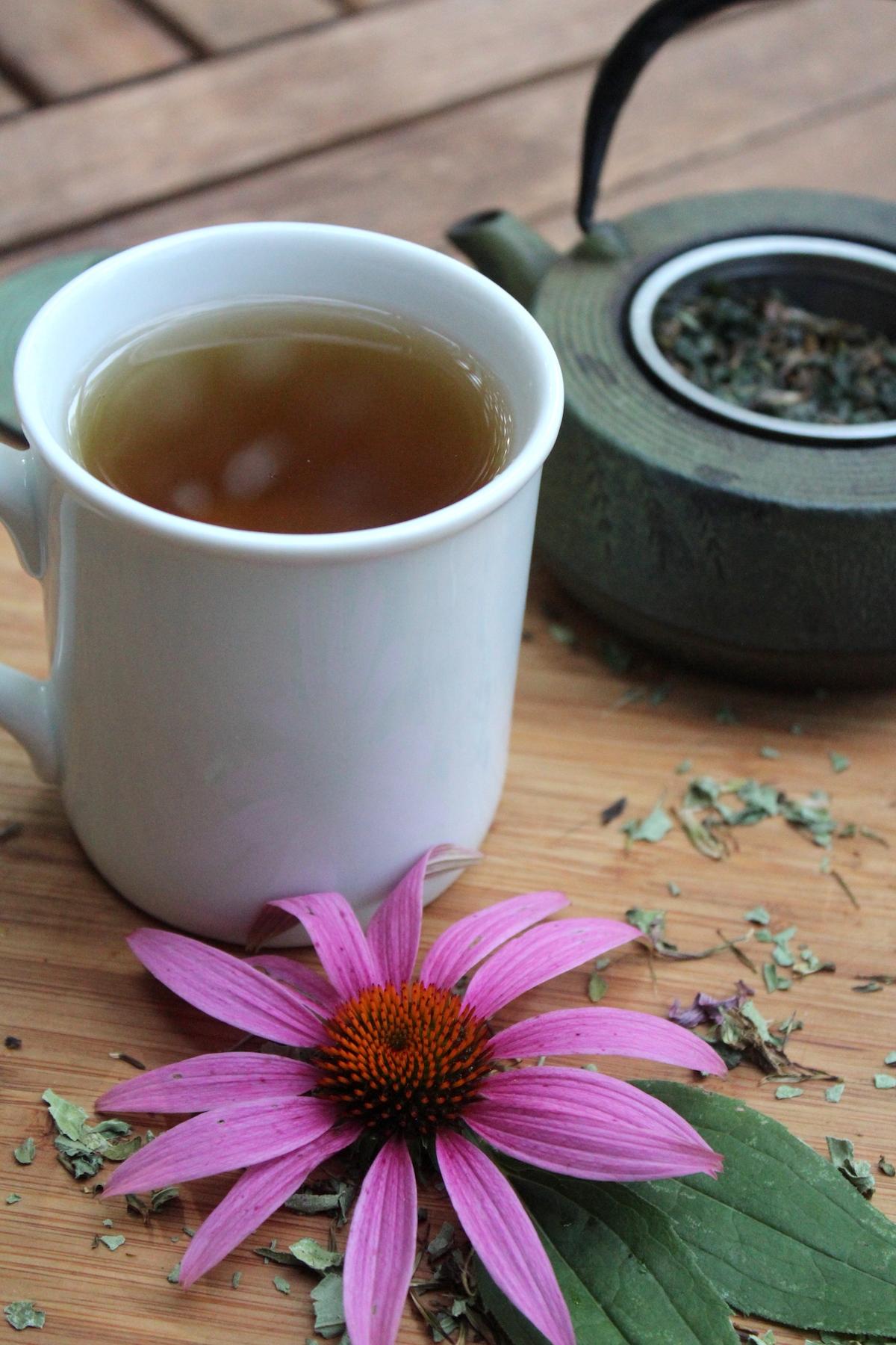 Homemade Echinacea Tea