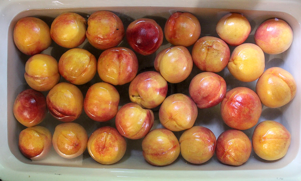 Peaches in Cold Water Bath preparing to peel for canning