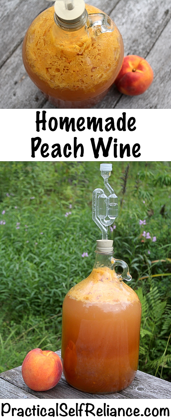 Homemade Peach Wine Recipe #wine #peach #recipe #homemade #homebrew #winemaking #fermenteddrink #drinks #winerecipes