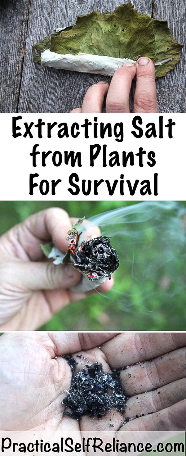 Extracting Salt from Plants for Survival #salt #survival #shtf #preparedness #prepper #survivalist #homesteading #selfsufficiency #selfreliant