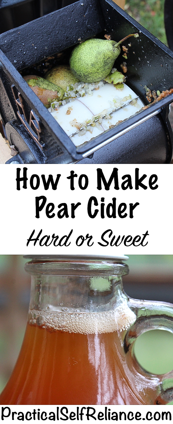 How to Make Pear Cider ~ Hard or Sweet ~ Homemade Perry #pearcider #applecider #recipes #homemade #cider #hardcider #foodpreservation #selfsufficiency #homesteading