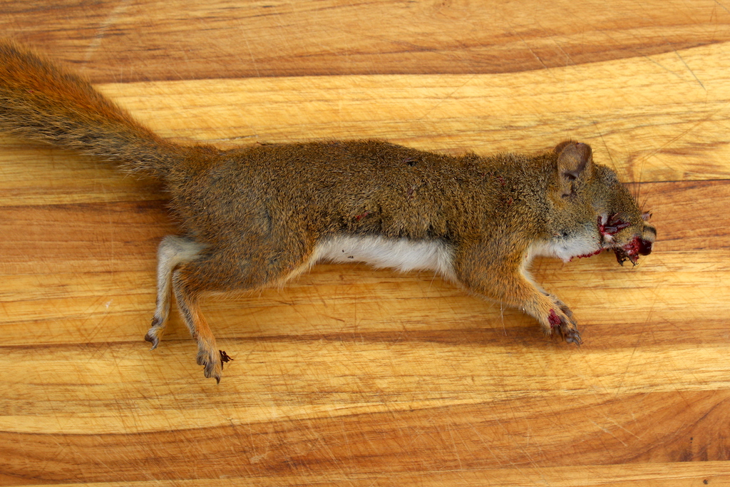 Squirrel Shot with 22