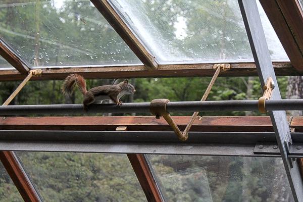 Greenhouse Squirrel Display