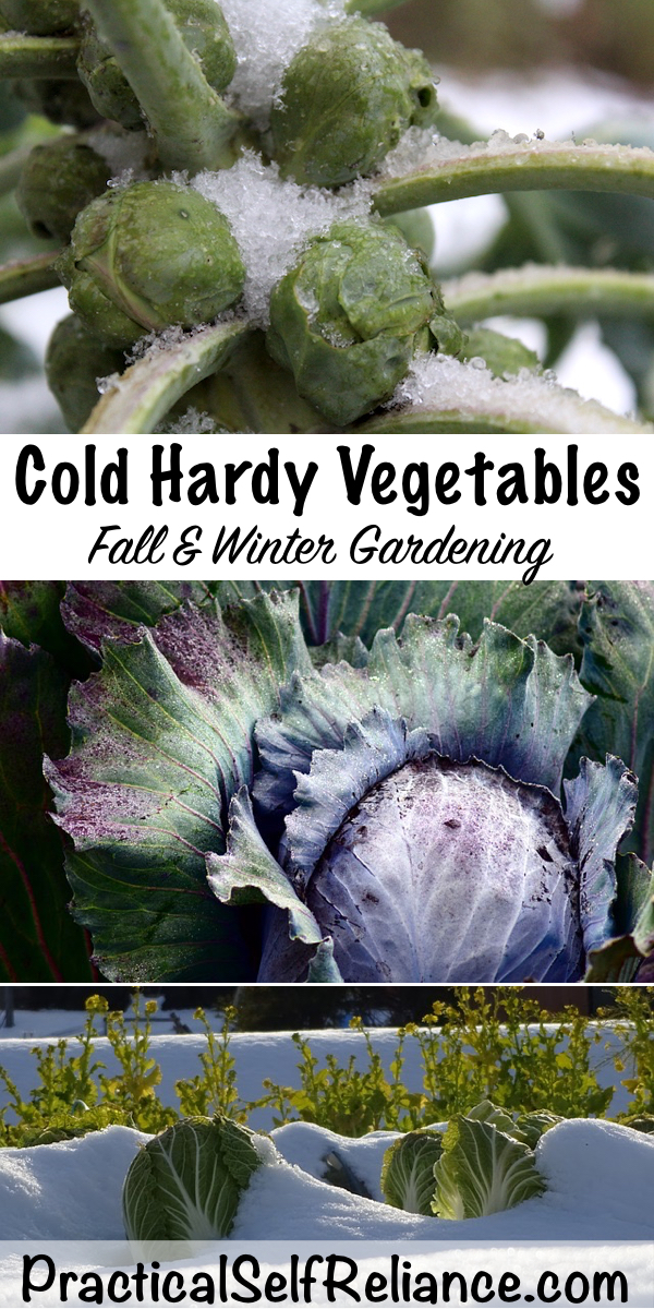 Cold Hardy Vegetables for Fall Gardening ~ Winter Gardening #vegetable #gardening #growingfood #wintergardening #fallgarden #coldclimate #gardeningtips #homesteading