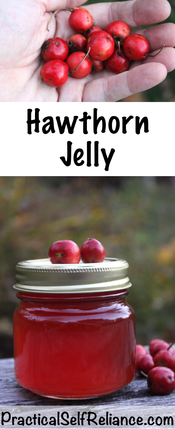 Hawthorn Jelly Recipe for Canning #hawthorn #recipes #jellyrecipes #canning #foodpreservation #homesteading