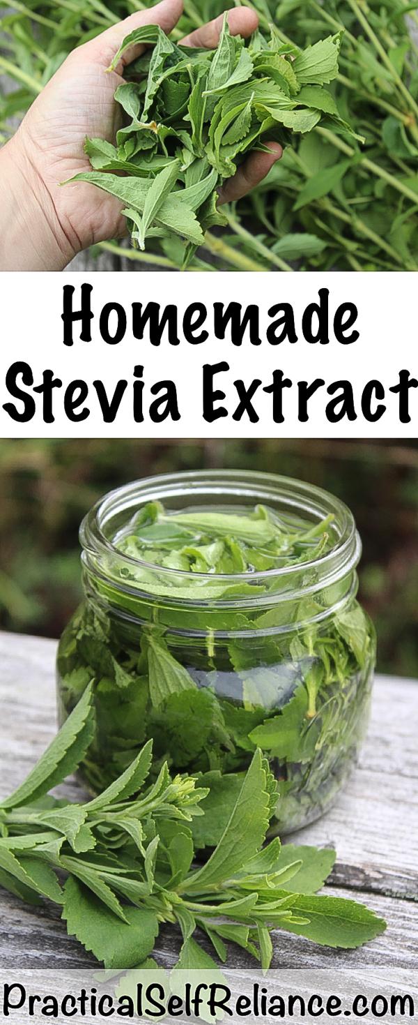 How to Make Stevia Extract or Stevia Powder ~ Home Grown Sugar Free Sweetener #stevia #howtogrow #steviapowder #steviaextract #diy #sugarfree #healthyrecipes