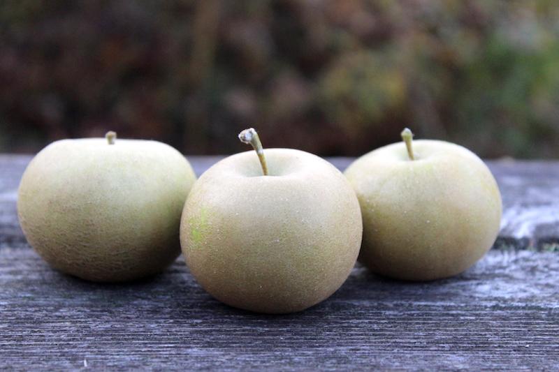 Pomme Grise Apples