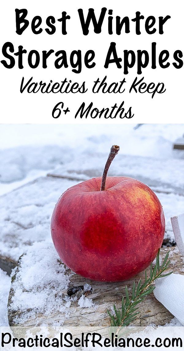 Best Winter Storage Apples ~ Apples that Keep All Winter ~ 6 Months or More #applevarieties #apples #foodpreservation #foodstorage #preparedness #appletrees