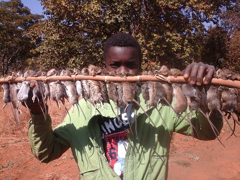 Zambian boy selling mice as food