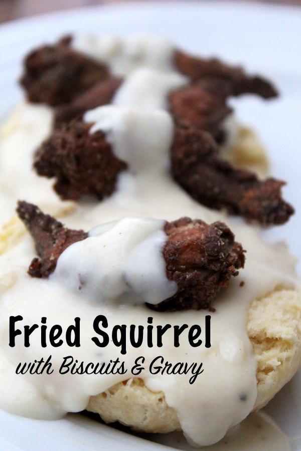 Buttermilk Fried Squirrel with Biscuits and Gravy #squirrel #recipe #howtocook #wildgame #hunting #survivalist #prepper #homesteading #friedfood #biscuitsandgravy