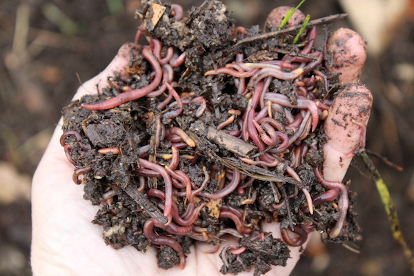 Healthy Worm Compost