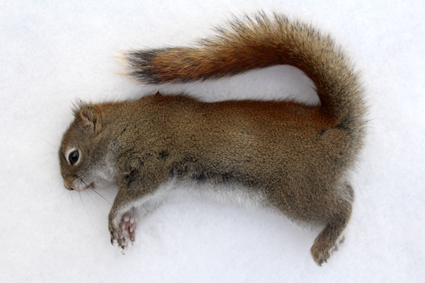 Squirrel Hunting ~ Ways to Cook Squirrel